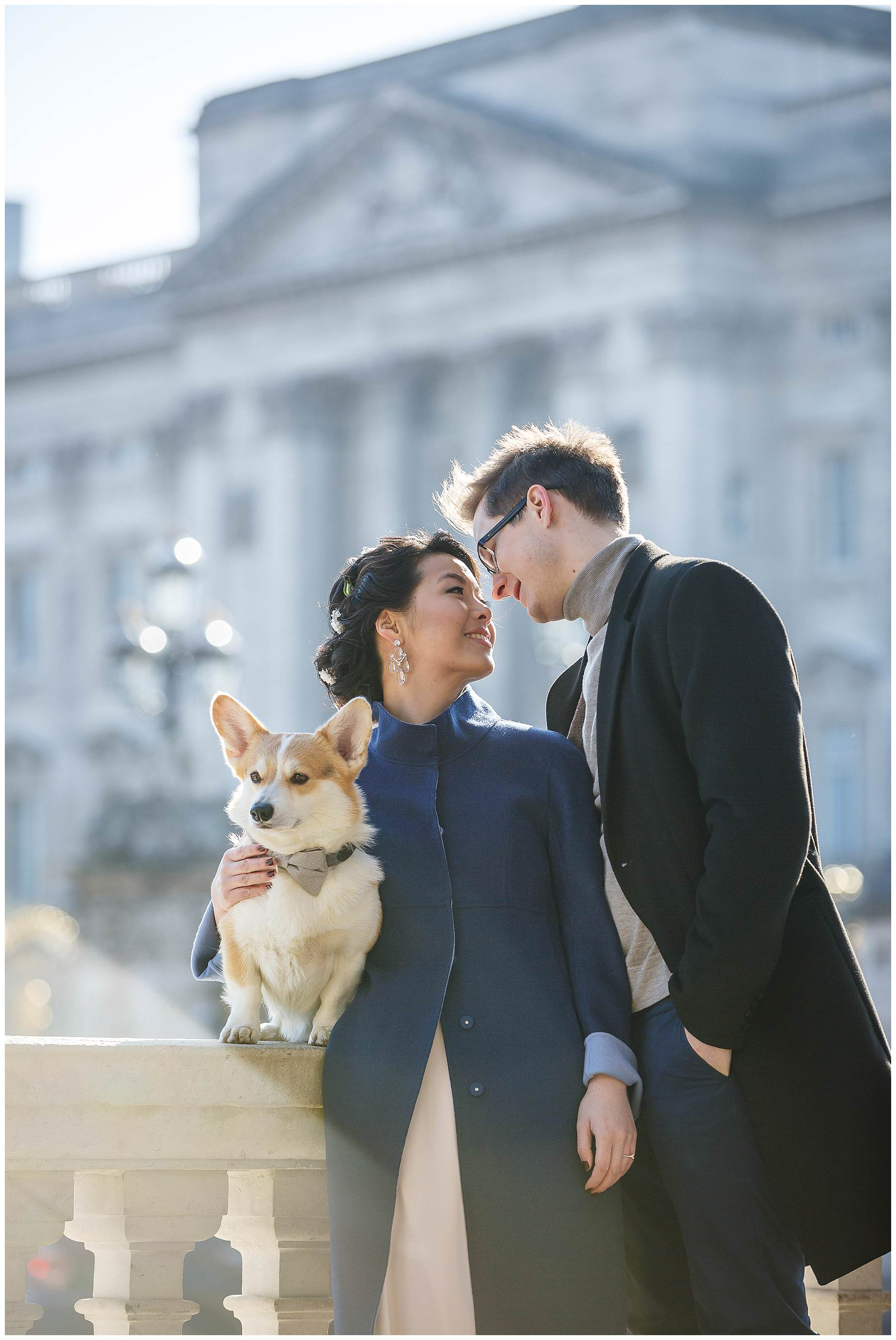 buckingham palace winny the corgi