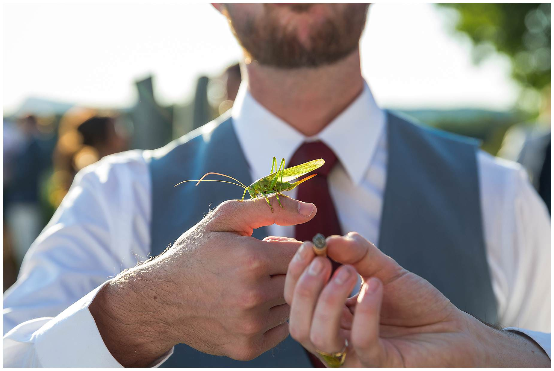 grasshopper at wedding