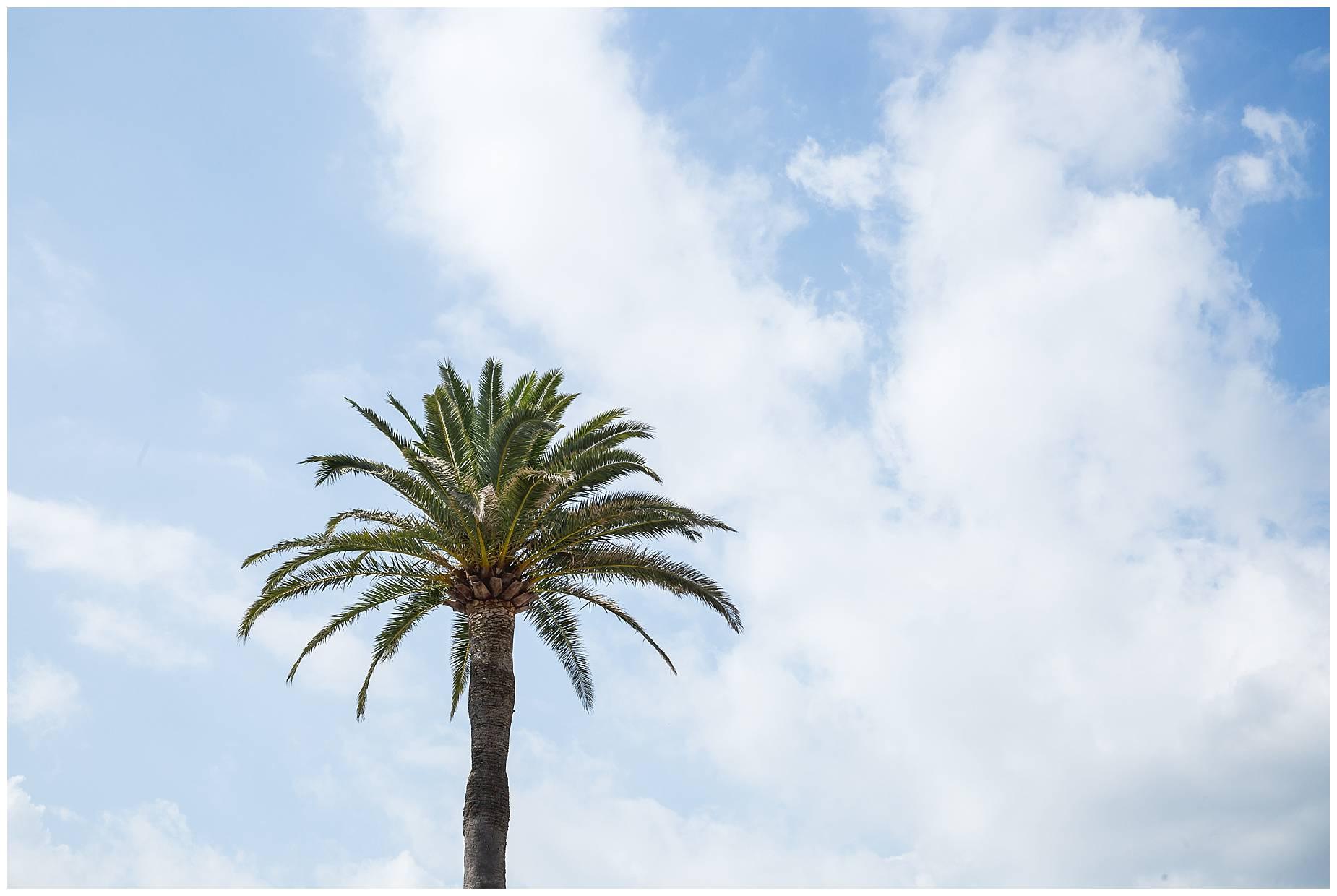 Port Grimaud palm tree